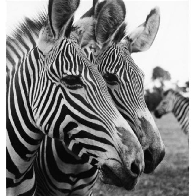 Posterazzi SAL9902543 Close-Up of Two Zebras Poster Print - 18 x 24 in. - image 1 of 1