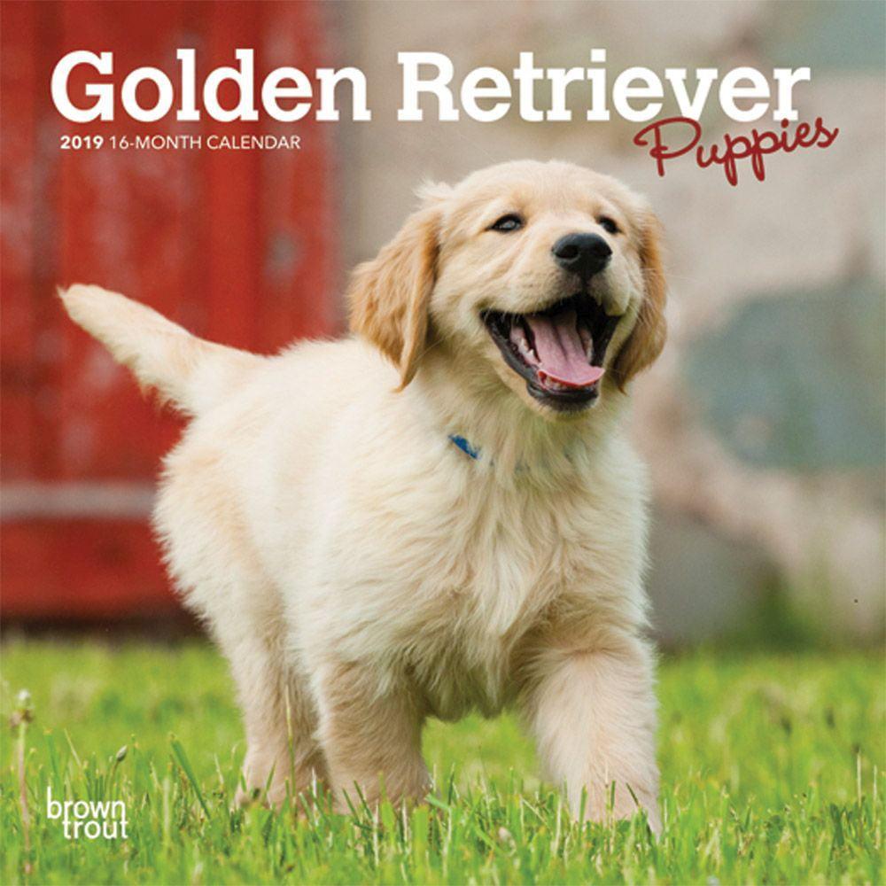 Golden Retriever Puppies Mini Wall Calendar, Golden Retriever by Calendars