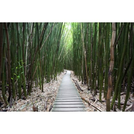 Hawaii Maui Kipahulu Haleakala National Park Trail through bamboo forest on the Pipiwai trail Stretched Canvas - Jenna Szerlag  Design Pics (19 x 12) ()