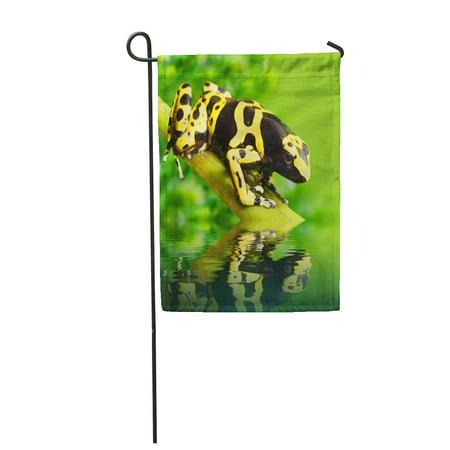 KDAGR Green Reptile The Poison Dart Frog Dendrobates Leucomelas in Rainforest Peru Garden Flag Decorative Flag House Banner 28x40 inch