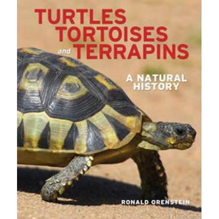 - Turtles, Tortoises and Terrapins - eBook