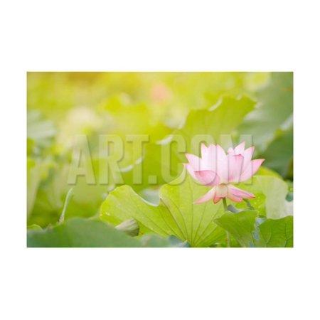 Morning Lotus Flower in the Farm under Warm Sunlight Print Wall Art By elwynn Blue Lotus Farm