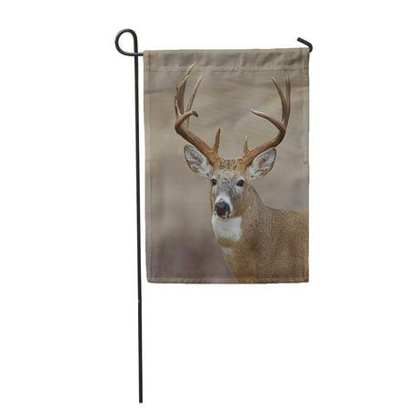 SIDONKU Trophy Whitetail Buck Deer Midwestern Hunting Illinois Ohio Wisconsin Minnesota Garden Flag Decorative Flag House Banner 12x18