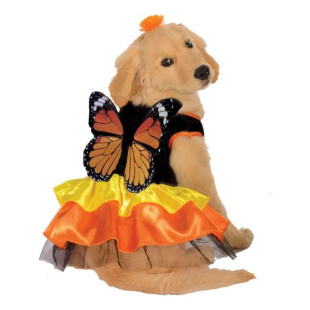 Halloween Monarch Butterfly Pet Costume](Cute Pet Halloween Costumes)