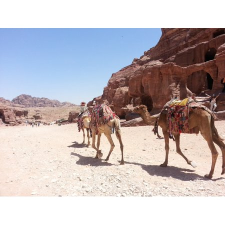Canvas Print Sunny Trip Arabian Nature Camel Desert Ride Stretched Canvas 10 x 14