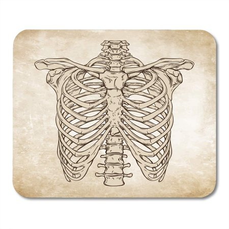 SIDONKU Sketch Line Anatomically Correct Human Ribcage Da Vinci Sketches Over Aged Anatomy Mousepad Mouse Pad Mouse Mat 9x10 inch