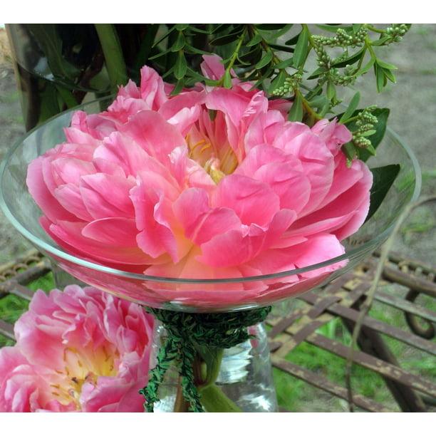 Pink Hawaiian Coral Peony Fragrant 4 Pot Walmart Com