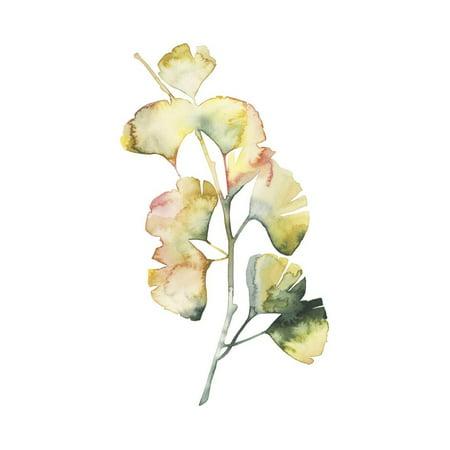 Maidenhair Shell - Maidenhair Branch I Print Wall Art