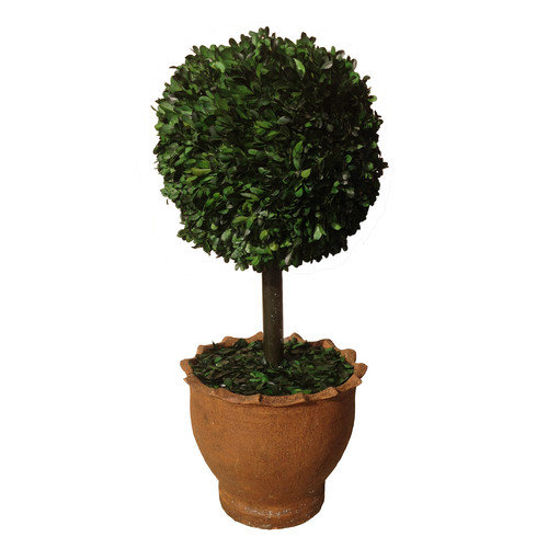 29-in Preserved Natural Boxwood Ball Topiary