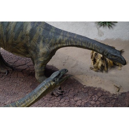 LAMINATED POSTER Evolution Dino Museum Exhibit Dinosaur Poster Print 24 x