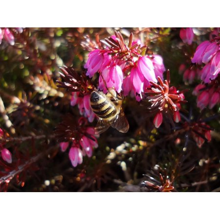 Laminated Poster Bloom Spring Insect Pollination Blossom Bee Poster Print 24 x 36