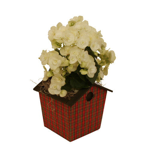 WaldImports Holiday Red Plaid Bird House Wood Pot Planter (Set of 6)