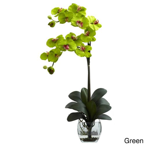 Double Phal Orchid with Vase Arrangement Double Phal Orchid w/Vase Arrangement - Green