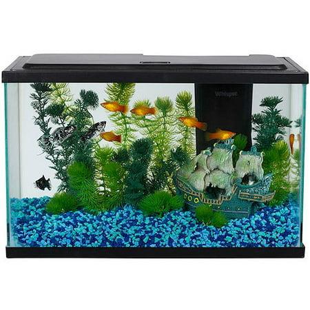 Aqua culture 5 gallon aquarium starter kit with led for Kit aquarium