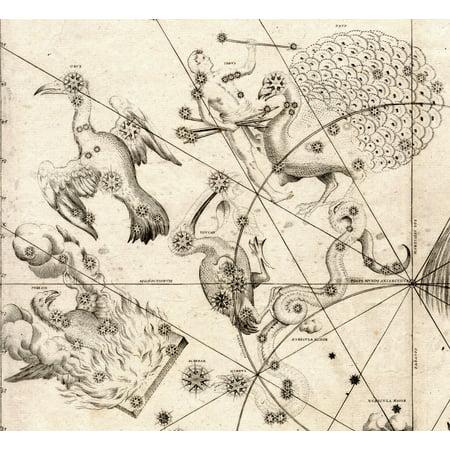 LAMINATED POSTER The Southern Birds, Pavo, Phoenix, Grus, and Tucana from Johann Bayer's Uranometria of 1603, the f Poster Print 24 x 36](Gru Symbol)