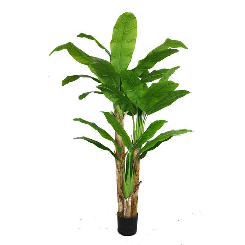 Laura Ashley by Vintage Home 72-in Banana Tree with Real Touch Leaves 48L 48W 72H
