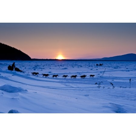Dallas Seavey Drops Down The Bank Onto The Yukon River Shortly After Leaving The Village Checkpoint Of Ruby At Sunset In Interior Alaska During The 2010 Iditarod Canvas Art   Jeff Schultz  Design Pics