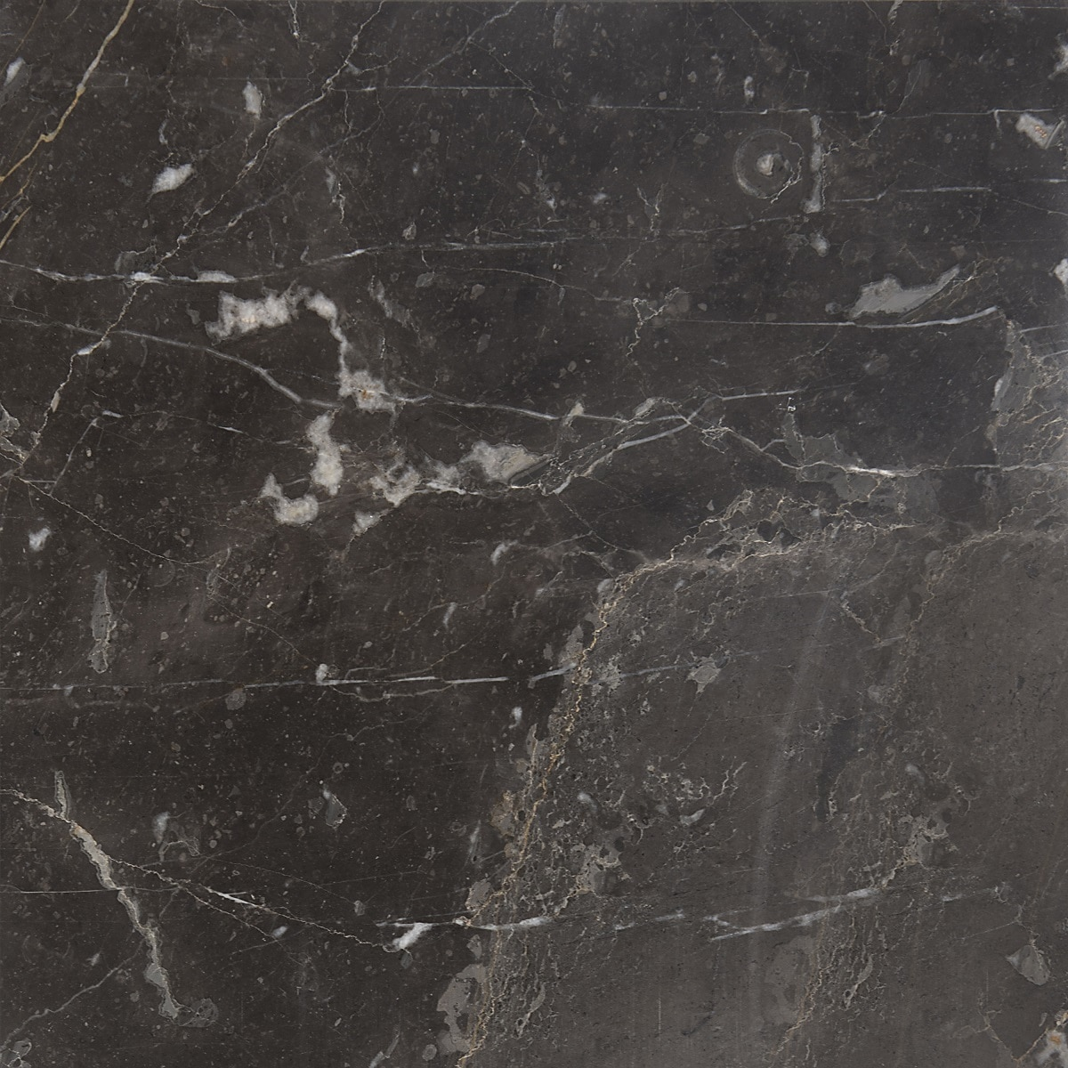 Marbletiledirect Olive/Maroon 12-inch x 24-inch x 1/2-inch Polished & Beveled Tiles