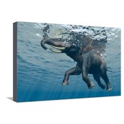 An Elephant Swims Through The Water Stretched Canvas Print Wall Art By 1971yes