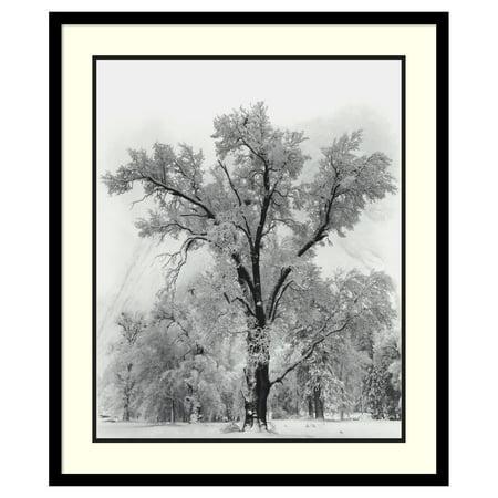 Amanti Art Framed Print - Oak Tree Snowstorm Yosemite National Park-1948 by Ansel Adams