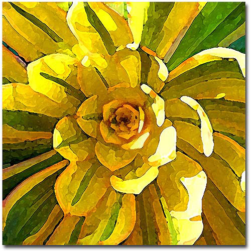 "Trademark Fine Art ""Succulent Square VII"" Canvas Wall Art by Amy Vangsgard"