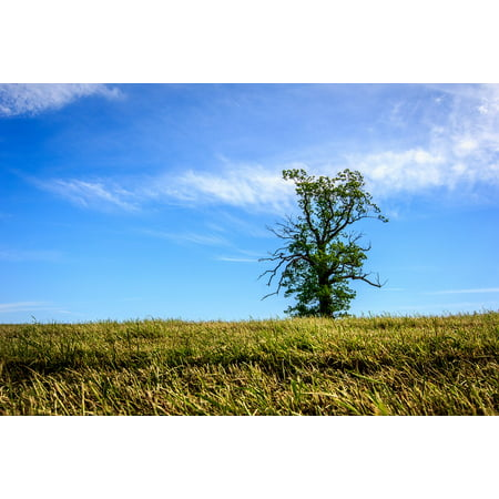 canvas print sky single field green nature tree horizon stretched canvas 10 x (Biella 10 Light Single)