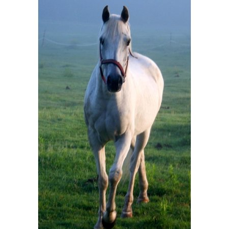 Equine Journal White Horse Galloping Across Field: (Notebook, Diary, Blank Book)