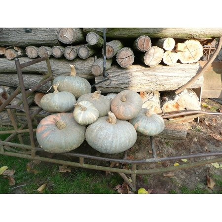LAMINATED POSTER Halloween Pumpkin Woodpile Pumpkins Poster Print 24 x 36](Halloween Pumpkin Art And Craft)