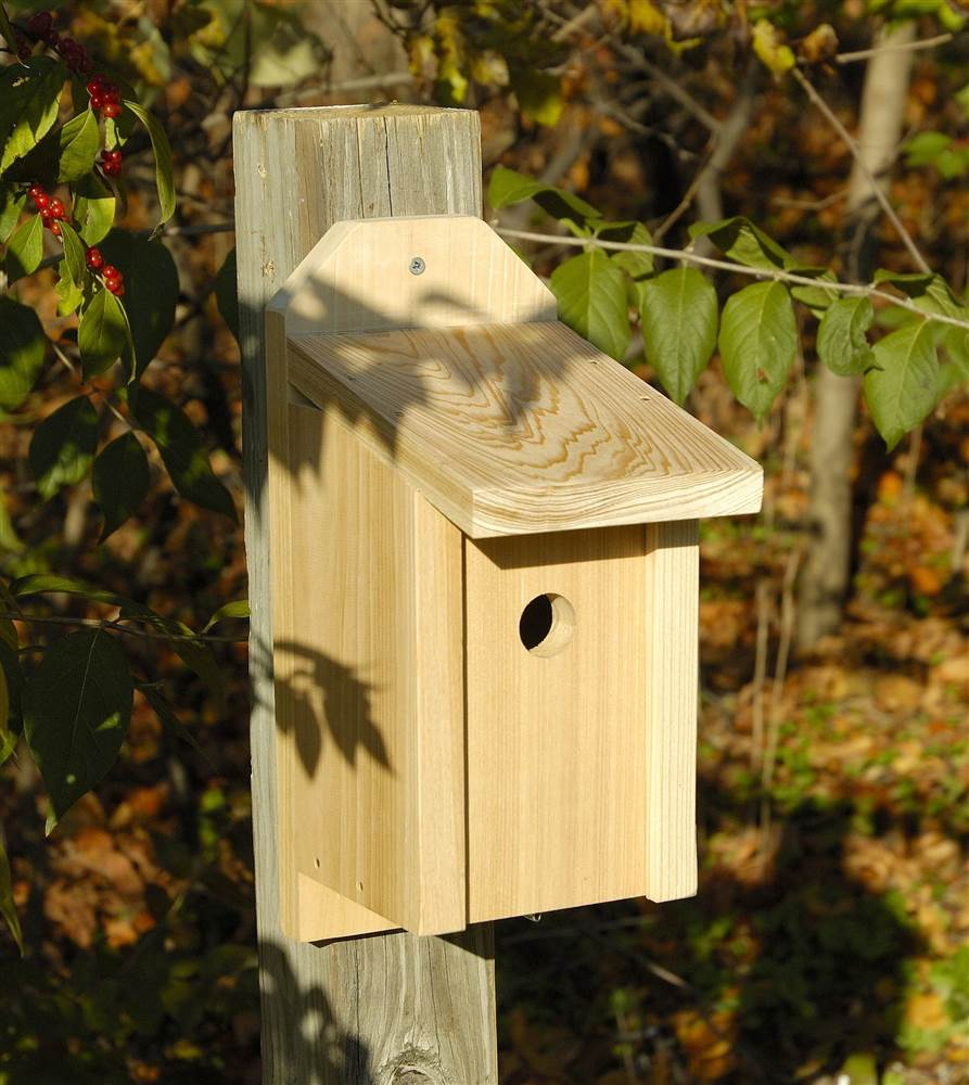 Wren, Titmous and Nuthatch Joy Box Bird House in Solid Cypress