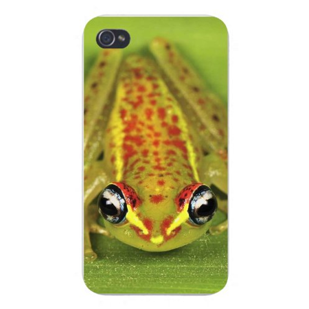 Apple Iphone Custom Case 4 4s White Plastic Snap on - Green Tree Frog Eyes Closeup Animal Amphibian