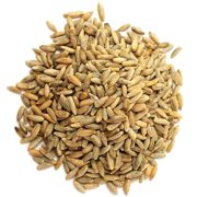 Organic Rye Berries, 20 Pounds - Whole Wheat Grain, Non-GMO, Kosher, Raw, Bulk Seeds, Product of the USA – by Food to Live