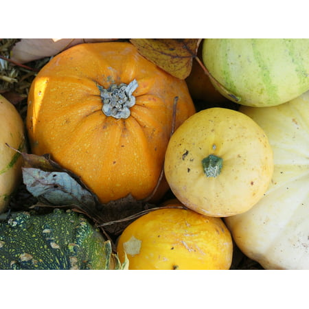 Canvas Print Gourd Fruit Pumpkin Halloween Autumn Orange Stretched Canvas 10 x 14