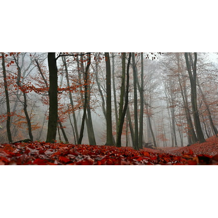 Framed Art for Your Wall Red Trees Nature Fog Autumn Forest Foliage 10x13 Frame