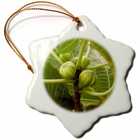 Snowflake Fold (3dRose Figs - epicurean, fig, figs, food, fruit, health, healthy - Snowflake Ornament, 3-inch )