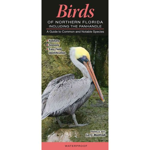 Birds of Northern Florida Including the Panhandle: A Guide to Common & Notable Species