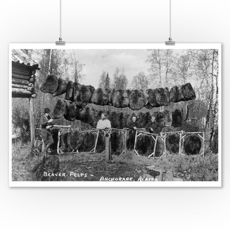 Anchorage, Alaska - View of Beaver Pelts and Trappers (9x12 Art Print, Wall Decor Travel