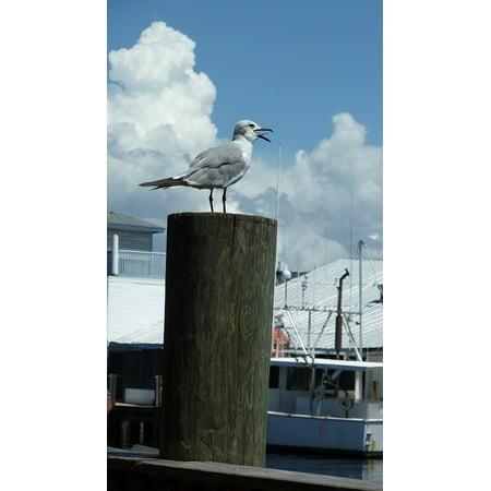 LAMINATED POSTER Nature Seagull Gull Animal Bird Dock Pier Poster Print 24 x 36 ()