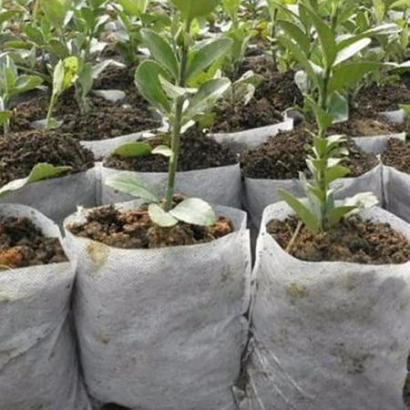 Plant Fiber Nursery Pots Seedling Raising Bag Plants Holder Garden Supply 100PCS