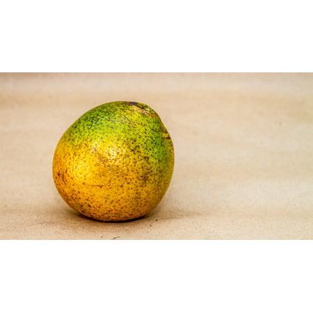 Canvas Print Food Oranges Vitamin Citrus Fruit Naranjo Tree Stretched Canvas 10 x