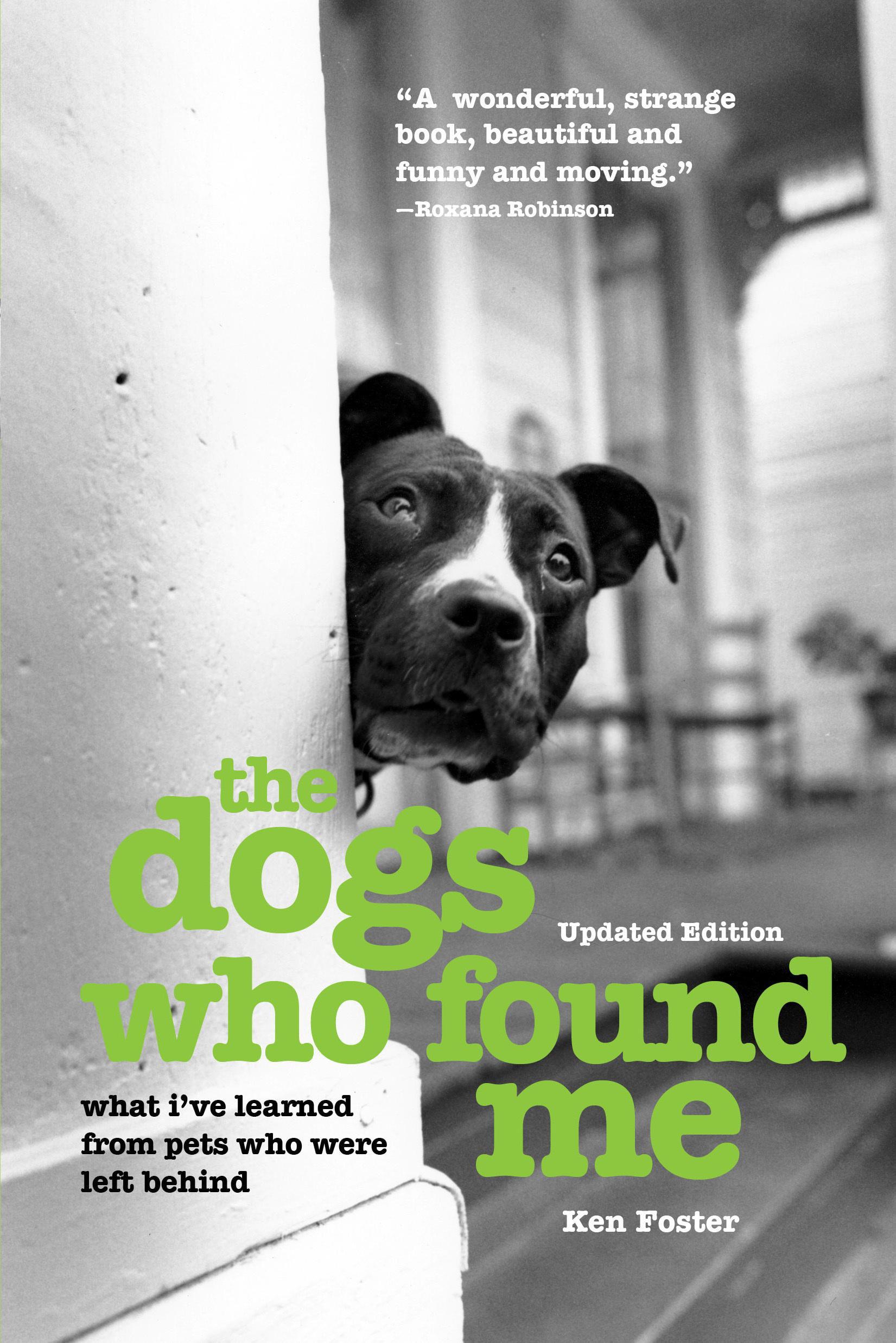 The Dogs Who Found Me (Paperback) - Walmart.com