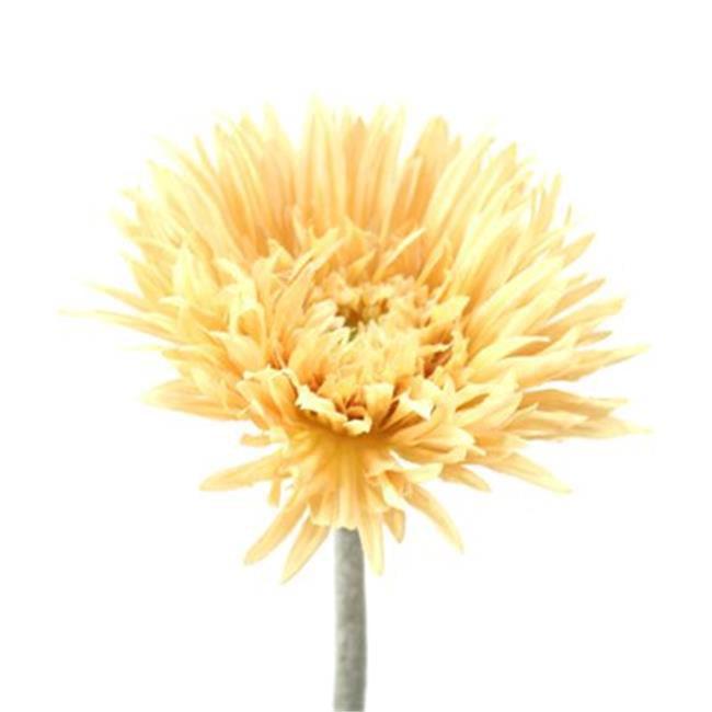 Distinctive Designs DI-716-BE DIY Flower 24.5 in. L Beige Spider Gerbera Daisy x 1 - Pack of 48