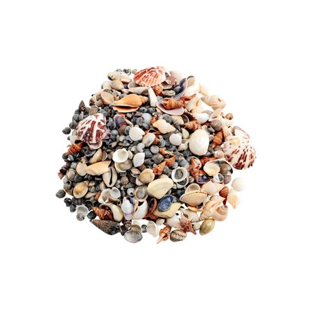 Colorations Sea Shells, Small - 1 lb. (Item # SMSS) Beach Inspired Sea Shell