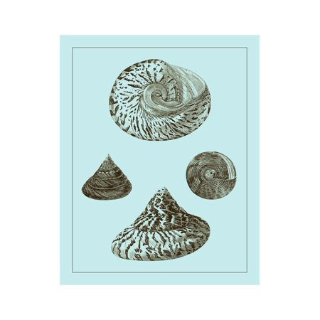 Tinted Shells on Aqua IV Print Wall Art By Vision Studio (Aqua Shell)