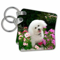 3dRose Bichon Frise in a flower pot - Key Chains, 2.25 by 2.25-inch, set of 2