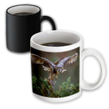 3dRose Statue, Eisenhower Presidential Center, Kansas - US17 DFR0048 - David R. Frazier, Magic Transforming Mug, 11oz