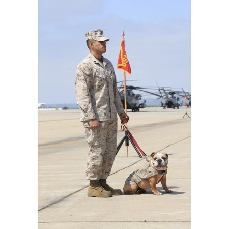 US Marine and the official mascot for Marine Corps Air Station Miramar Stretched Canvas - Stocktrek Images (23 x