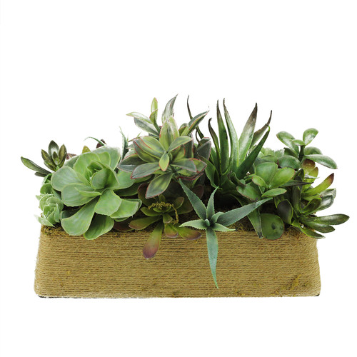 Northlight Seasonal Artificial Mixed Succulent Desk Top Plant in Planter