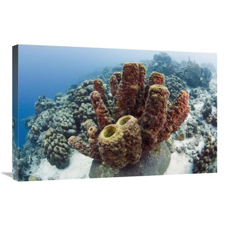 20 x 30 in. Brown Tube Sponge, Bonaire, Netherlands Antilles, Caribbean Art Print - Pete Oxford