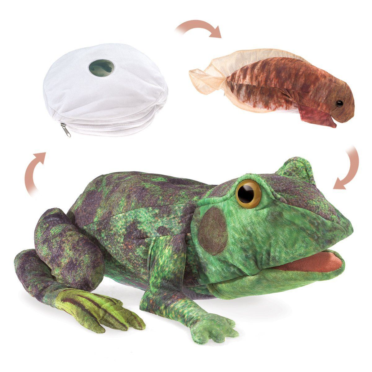 Frog Life Cycle Puppet 14 inch - Puppet by Folkmanis (3115)
