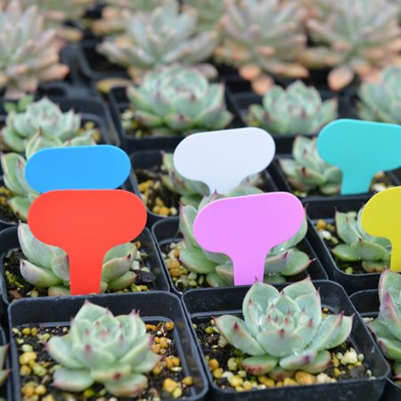 100pcs Tags for Gardening Plant T Shape Waterproof Tags Flower Vegetable Planting Label Tools Garden Tray